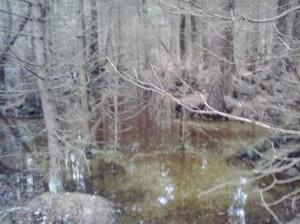 Detaljer av det översvämmade diket 2014-03-02